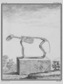 Renard, Squelette - Fox, Skeleton - Gallica - ark 12148-btv1b2300254t-f8.png