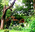 Resting place,national botanical garden Bangladesh.jpg