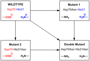 Salt bridge (protein and supramolecular) - Figure 4. Mutagenesis of T4 lysozyme salt bridge between Asp 70 and His 31