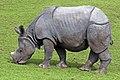 Rhino (5018221104).jpg