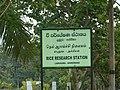 Rice research station - Labuduwa - panoramio.jpg