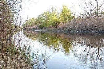 Rio Gallego cerca del Ebro.JPG