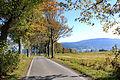 Road from Horní Vítkov to Albrechtice u Frýdllantu.jpg