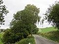 Road near Wenigerath - geo.hlipp.de - 43327.jpg