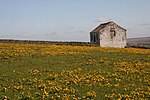 File:Roadside barn - geograph.org.uk - 1298024.jpg