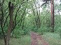 Robinia-pseudoacacia-12-V-2007-6032.jpg