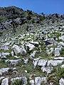 Rocky hill with little grass above Mohar Kalan.jpg