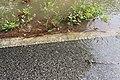 Roman Forest Flood - 4-18-16 (26486254476).jpg