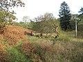 Rough ground near Rhyd-y-sarn - geograph.org.uk - 1568154.jpg