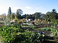 Ruskin Rd Allotment from Gainsborough Rd gate - geograph.org.uk - 1169615.jpg