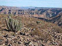 Namibija-Puščava Kalahari-SAC Namibia-cactus