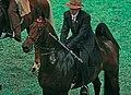 Saddlebred Horse (2787764829).jpg
