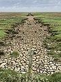 Salzwiesen bei Keitum auf Sylt im Weltnaturerbe 01.jpg