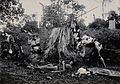 Sarawak; five native Kenyah warriors in a warfare ritual. Ph Wellcome V0037446.jpg