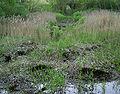 Satzer Moor Bohlenweg.jpg