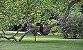 Schlosspark Eggenberg - platanus 01.jpg