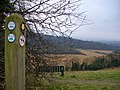 Scholar's Trail, Pewley Down - geograph.org.uk - 639592.jpg