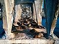 Sea Lions at Barón pier (40046603772).jpg