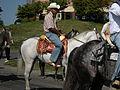 Seattle - Fiestas Patrias Parade 2008 - horses 11.jpg
