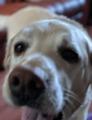 Seconddog081119.png