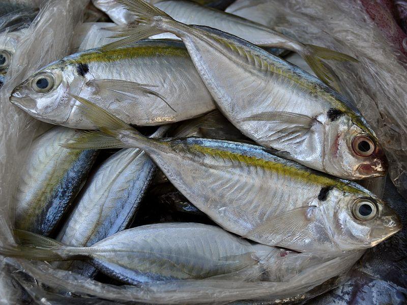 Pengajaran dari ikan selar 40 sen