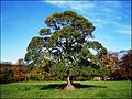 Selsley, Gloucestershire ... sweet chestnut. - Flickr - BazzaDaRambler.jpg