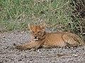 Serengeti 24 (14513975350).jpg
