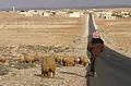 Shepherd, near Palmyra, Syria - 4.jpg