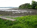 Shoreline of Strangford Lough - geograph.org.uk - 752195.jpg