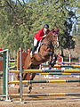 Show Jumping Competition 2014 Nir David.JPG