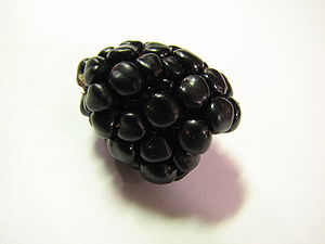 Single blackberry