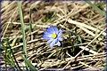 Single flower - panoramio.jpg