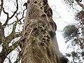 Snail trails, Lambroughton Wood, Chapeltoun, North Ayrshire.jpg