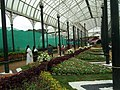 Snap from Lalbagh Flower Show Aug 2013 8358.JPG