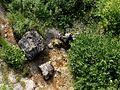 Soča - panoramio (28).jpg