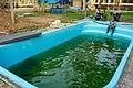 Soltura de peixe-boi, Amapá (48997851772).jpg