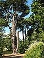 Somerleyton Hall - gardens - geograph.org.uk - 1506798.jpg