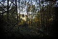 Sonnenuntergang - panoramio (26).jpg