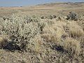 South of Marsing sagebrush steppe (MacBride Creek Road) (9674220149).jpg