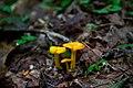 Spring-mushrooms-forest-floor - West Virginia - ForestWander.jpg