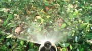 File:Sprinkler-irrigation-in-Perunthurai.ogv