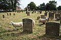 St James' Church, Freiston, Lincolnshire - churchyard sheep.jpg
