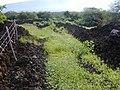 Starr-020124-0016-Nicotiana glauca-pin road-Puu o kali-Maui (24546214055).jpg