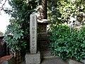 Stele of Pinus thunbergii Akiba.JPG