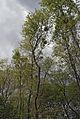 Sternwartepark Währing Baum 344.jpg