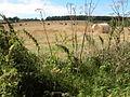 Straw bales near Upcote Farm - geograph.org.uk - 244639.jpg
