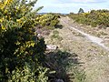 Studland Heath - geograph.org.uk - 715723.jpg