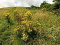 Sugar Loaf Hill - geograph.org.uk - 909193.jpg