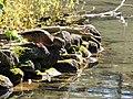 Sulphur Springs Conservation Area (43759438935).jpg