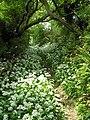 Summer Way (Maes yr Haf) off Water Street, May 2006 - geograph.org.uk - 844238.jpg